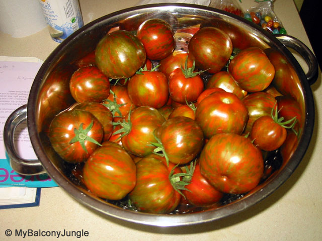 Black Zebra Tomatoes