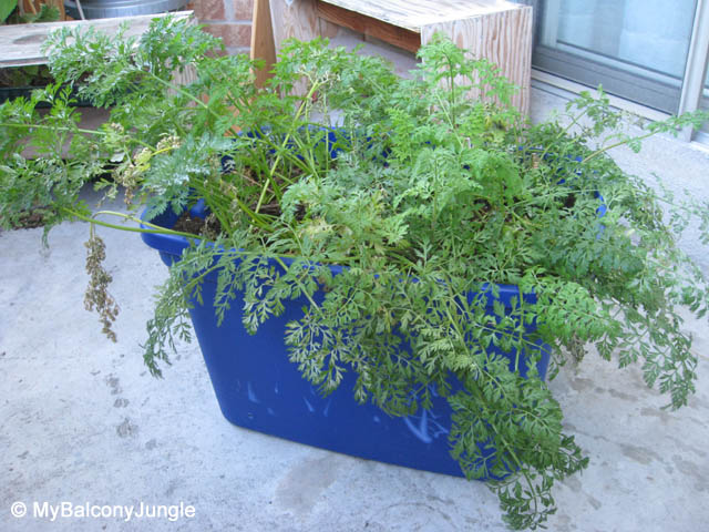 Growing Root Vegetables In Containers